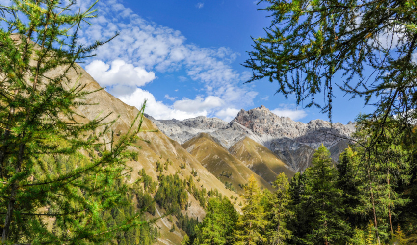 Swiss National Park selected as technology testing ground for nature conservation